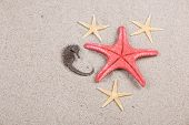 starfish and shells on the beach vacation memories poster