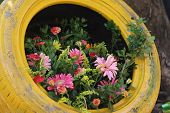 Flowers are growing in a yellow tire poster