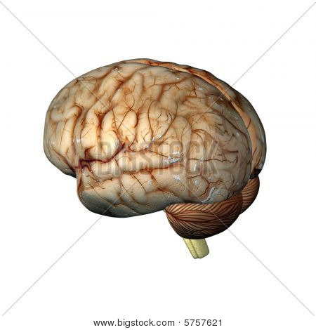 A CG rendering of a human brain 3d model poster