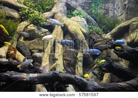 Fishes in a Tropical Acquarium