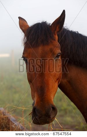 Brown Horse Eating Grass In Summer Morning