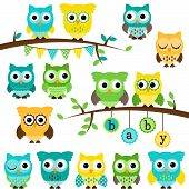 Vector Collection of Gender Neutral Baby Shower Themed Owls and Branches poster