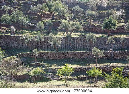 Terraced agriculture