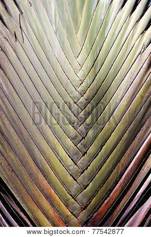 Photo Background Palm Leaf