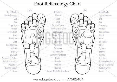 Foot Reflexology Chart Outline