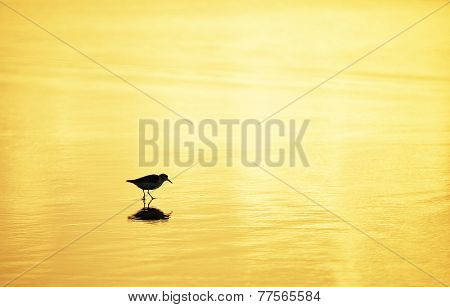 Bird on  Playa del Ingles in Gran Canaria, Spain