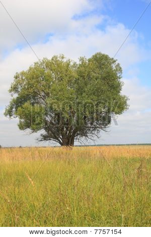 Large Single Tree