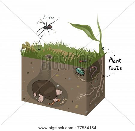 Vector Graphic Diagram Of Soil