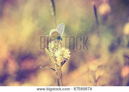 Macro Image Of Butterfly.