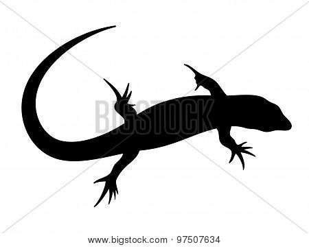 Vector illustration of abstract lizard in black color