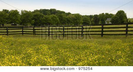 Paard boerderij