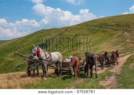 Pair of horses and an old cart in Carpathians