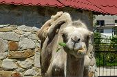 This photo was shot in the Crimea, Yalta zoo poster