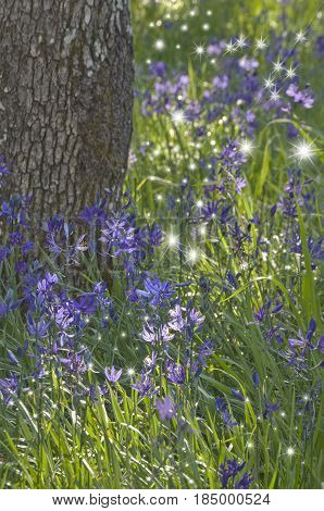 Closeup of Purple Camas flowers with dancing fairy lights
