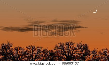 Tree Silhouettes, Cloudy Sky and Visibling Moon in the Sunset Background Illustration