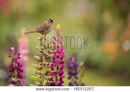 A small finch sitting on a snap dragon