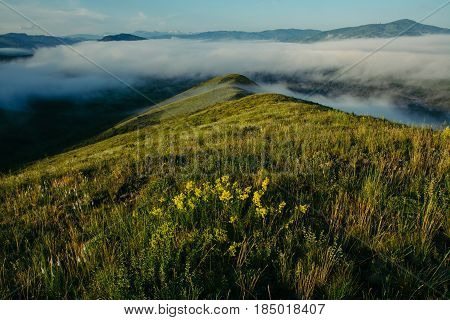 Incredibly beautiful landscape of fog on top of blooming hills. Walk among the fog.