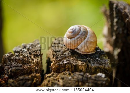 Snail's Shell On A Tree