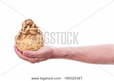 male hand is holding a celeriac in front of white background