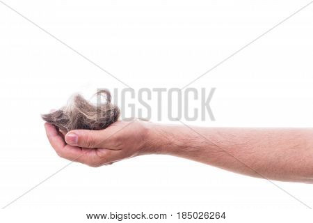 male hand is holding pet hair isolated in front of white background