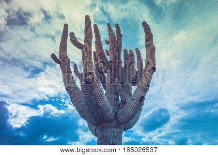 Ancient Saguaro cactus tree silhouette against dramatic cloudscape in the Arizona desert