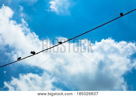 Birds hanging on a wire, Campania Italy