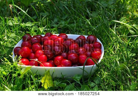Sweet cherries in a white bowl in the grass. Cherry, first spring fruit