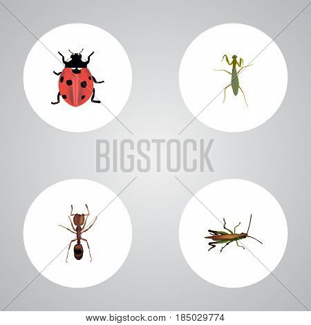 Realistic Emmet, Ladybird, Grasshopper And Other Vector Elements. Set Of Hexapod Realistic Symbols Also Includes Pismire, Ladybug, Grasshopper Objects.