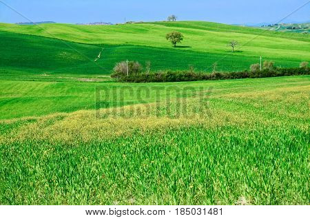 Rolling hills of Tuscany at spring, toned image