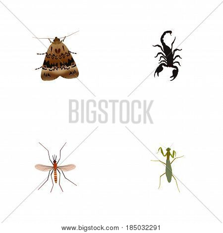 Realistic Gnat, Grasshopper, Butterfly And Other Vector Elements. Set Of Bug Realistic Symbols Also Includes Grasshopper, Locust, Scorpion Objects.