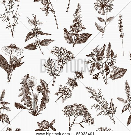 Botanical plant illustration. Vintage Medicinal Herbs and Poisonous Plants sketch. Seamless pattern