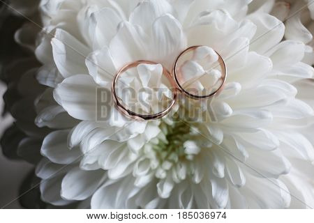 Wedding Rings Close-up On White Chrysanthemum.chrysanthemums And