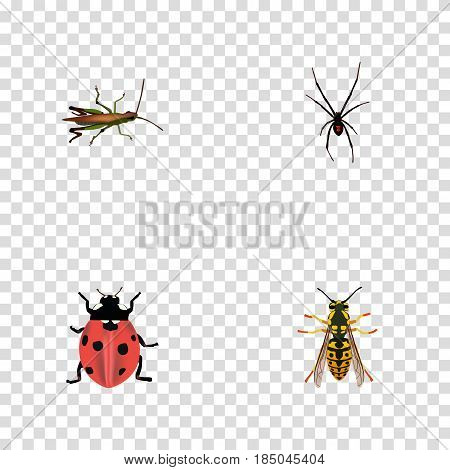 Realistic Locust, Bee, Ladybird And Other Vector Elements. Set Of Animal Realistic Symbols Also Includes Bee, Locust, Grasshopper Objects.