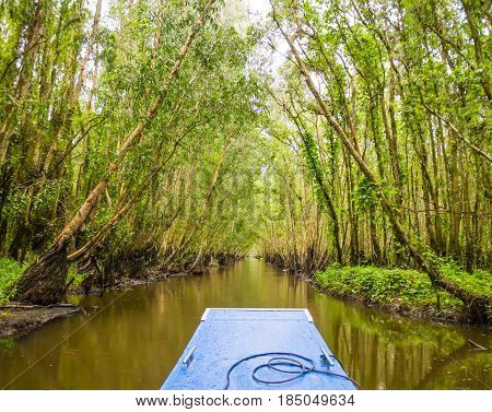 Going by boat through Tra Su mangrove forest, Mekong delta, Vietnam