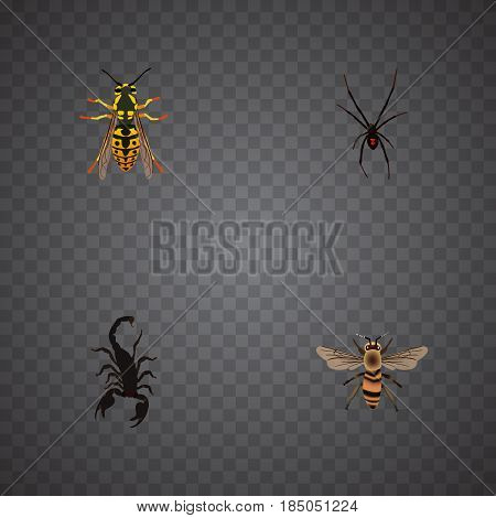 Realistic Spinner, Bee, Poisonous And Other Vector Elements. Set Of Bug Realistic Symbols Also Includes Poisonous, Bee, Spider Objects.