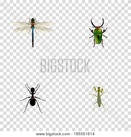 Realistic Grasshopper, Ant, Damselfly And Other Vector Elements. Set Of Hexapod Realistic Symbols Also Includes Dragonfly, Insect, Locust Objects.