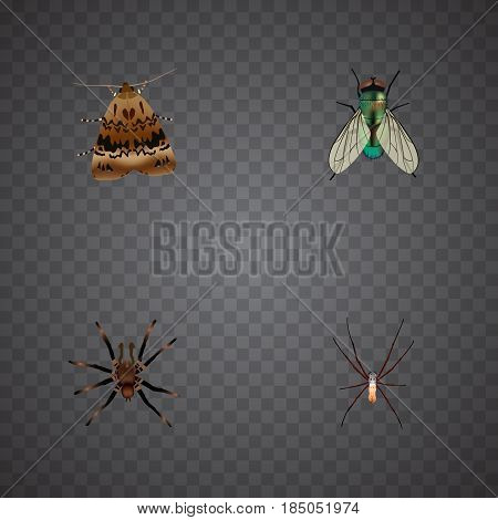 Realistic Arachnid, Spider, Butterfly And Other Vector Elements. Set Of Animal Realistic Symbols Also Includes Fly, Spider, Arachnid Objects.