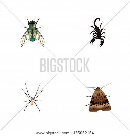 Realistic Poisonous, Housefly, Spider And Other Vector Elements. Set Of Hexapod Realistic Symbols Also Includes Poisonous, Scorpion, Spider Objects.
