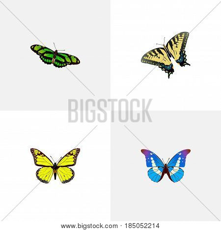 Realistic Checkerspot, Archippus, Bluewing And Other Vector Elements. Set Of Beauty Realistic Symbols Also Includes Tiger, Fly, Monarch Objects.