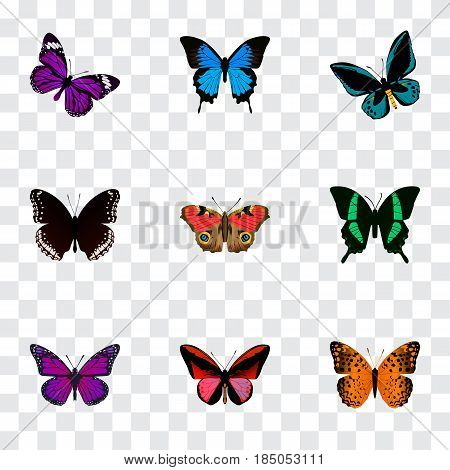 Realistic Spicebush, Purple Monarch, Callicore Cynosura And Other Vector Elements. Set Of Butterfly Realistic Symbols Also Includes Fly, Hypolimnas, Cynosura Objects.