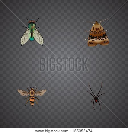 Realistic Wisp, Housefly, Spinner And Other Vector Elements. Set Of Animal Realistic Symbols Also Includes Fly, Butterfly, Wasp Objects.