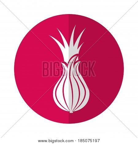 custard apple fresh vegetable icon vector illustration design