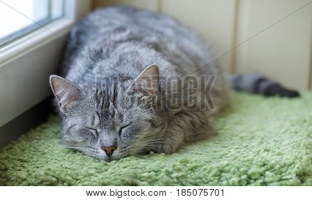 Sleepy cat in a balcony. Funny sleeping cat on hot summer day, humorous photo of sleeping cat. Cat resting