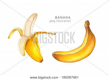 Hand drawn banana set raster illustration.