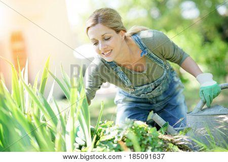 Smiling blond woman gardening