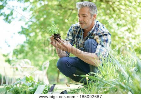 Mature man in garden planting new flowers