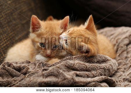 Pets / Kittens / Little kittens play