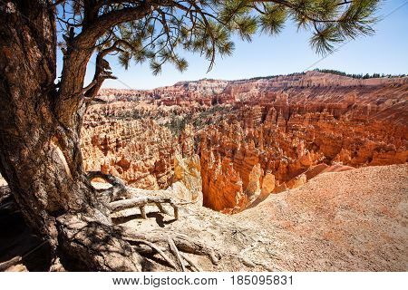 Canyon view of Bryce National Park in Utah