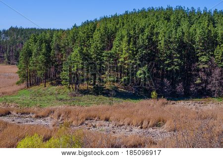 Spring landscape pine forest on the mountain and swamp