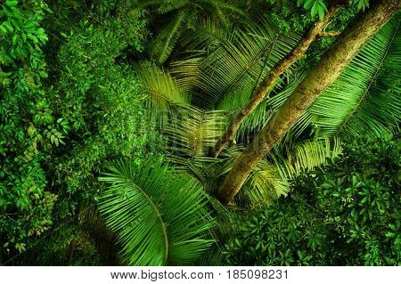 Tropical rainforest view from top, Taman Negara, Malaysia.